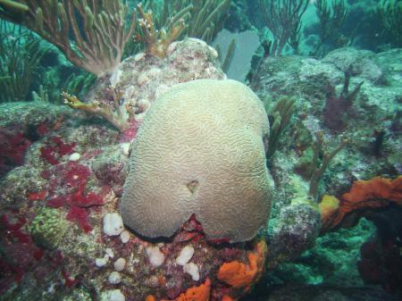 St_Maarten_04.jpg